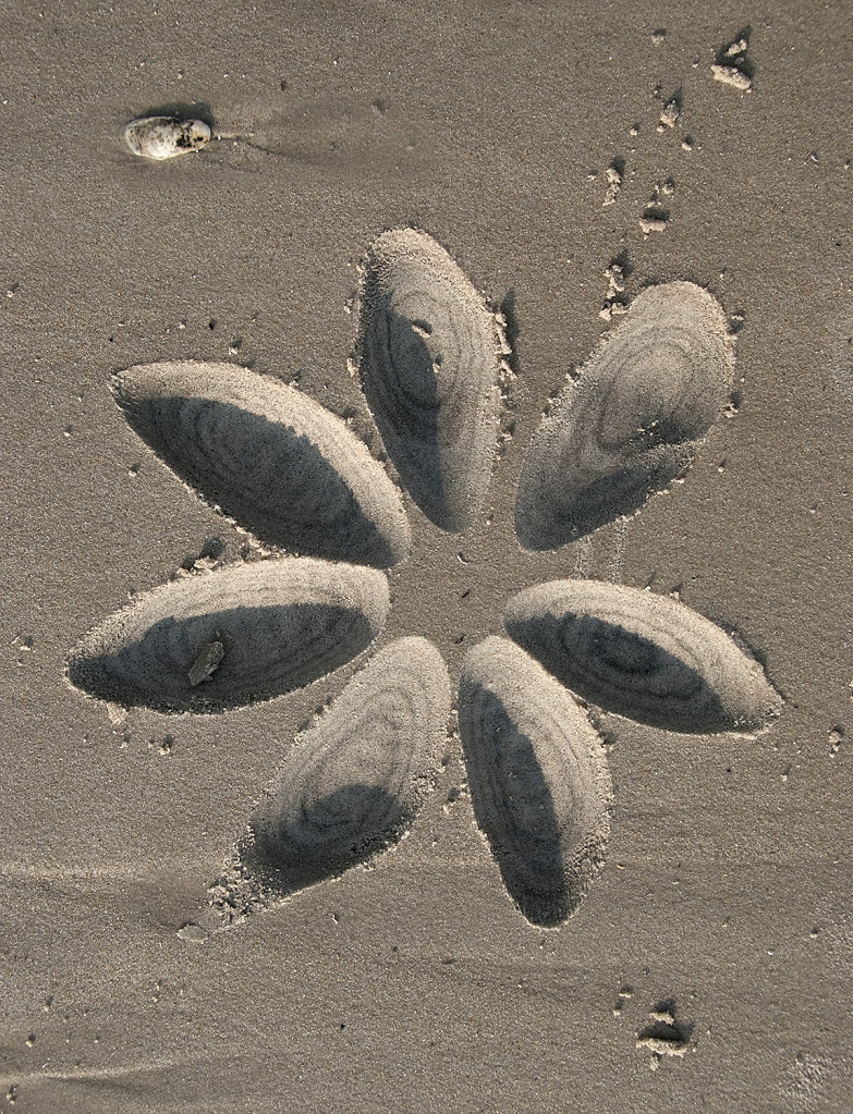 Beach Petals