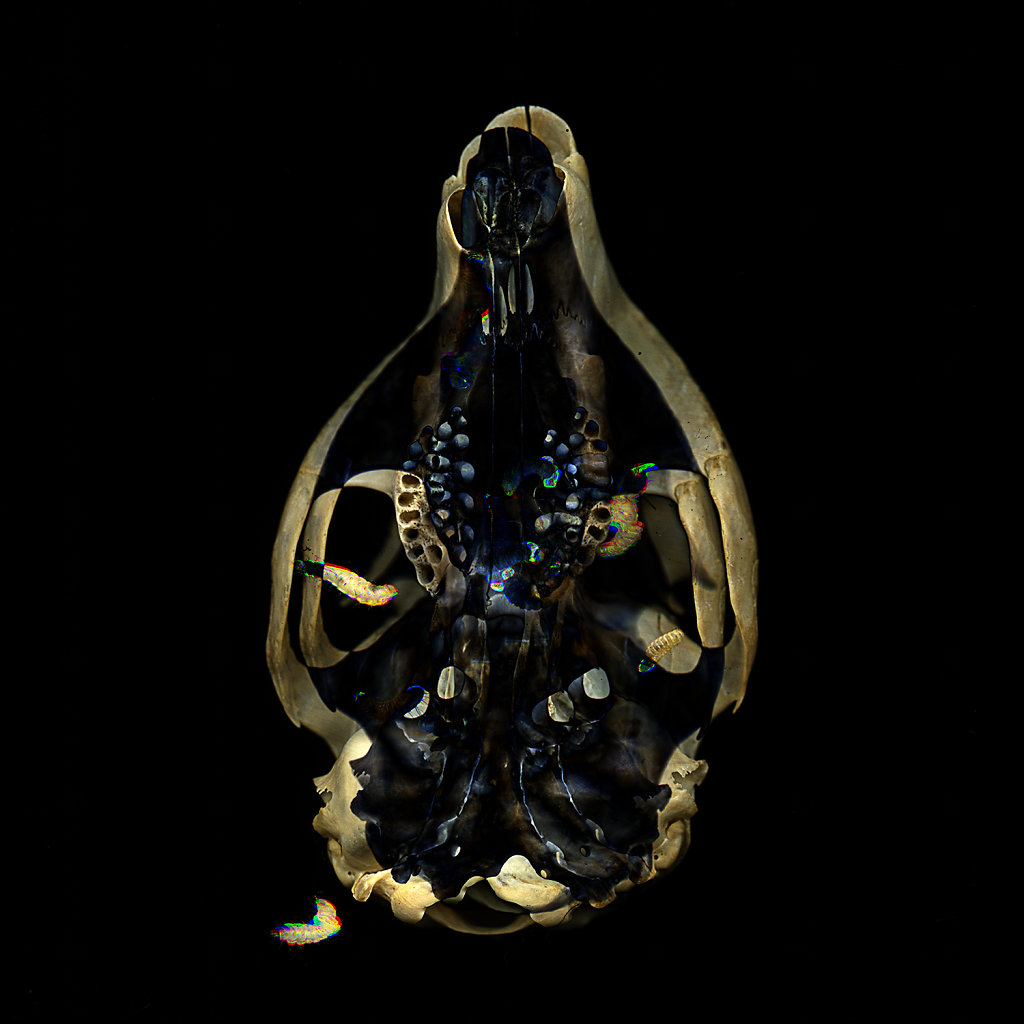 Squirrel Skull Madonna