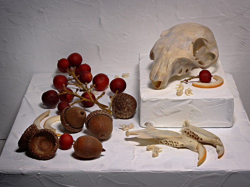 Still Life with Squirrel Skull and Acorns